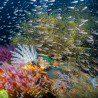 JenniferPenner-KomodoIndonesia-FishFireworks