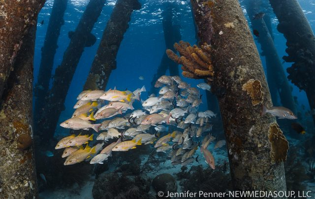 Newmediasoup-Jennifer-Penner-Bonaire-2017-10