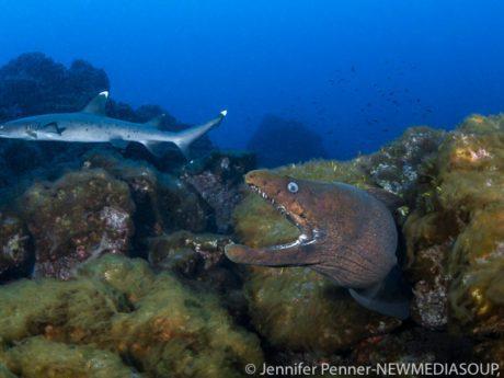 Revillagigedo Islands, Socorro, Mexico, Solmar V, scuba diving, live aboard, eel, shark, blue water, ocean