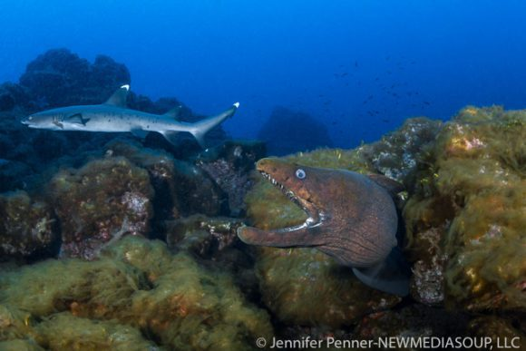Revillagigedo Islands, Socorro, Mexico, Solmar V, scuba diving, live aboard, eel, shark, blue water, ocean