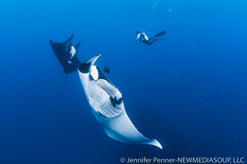 Newmediasoup-Jennifer-Penner-Revillagigedo-Socorro-Mantas-Diver-2-