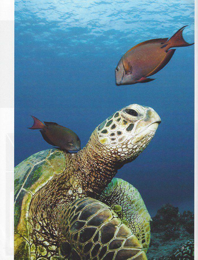 Newmediasoup-Scuba-Diver-Ocean-Planet-article-website-4