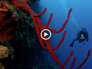 experience-little-cayman-diving