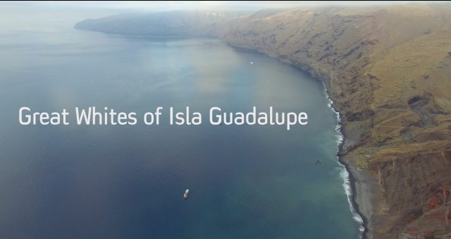 great-whites-isla-guadalupe-video-1